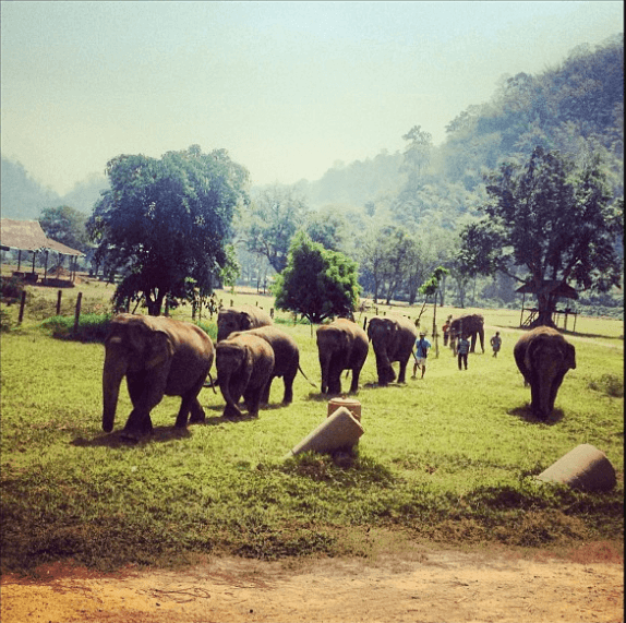 Tinka spent two summers in Thailand, working at an elephant sanctuary. She now sponsors Medo the elephant.